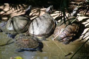 zoo bday 2012 082